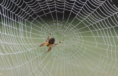 sonar con arañas
