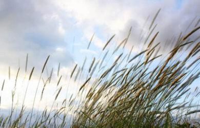 sonar con viento